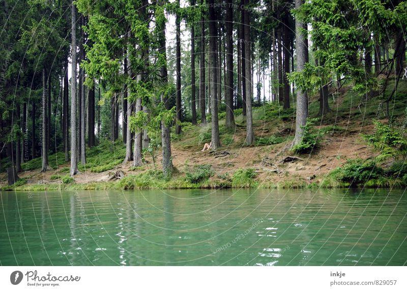 Suchbild Mensch Frau Natur Ferien & Urlaub & Reisen Mann nackt Sommer Erholung Landschaft Wald Umwelt Erwachsene Leben natürlich Freiheit See