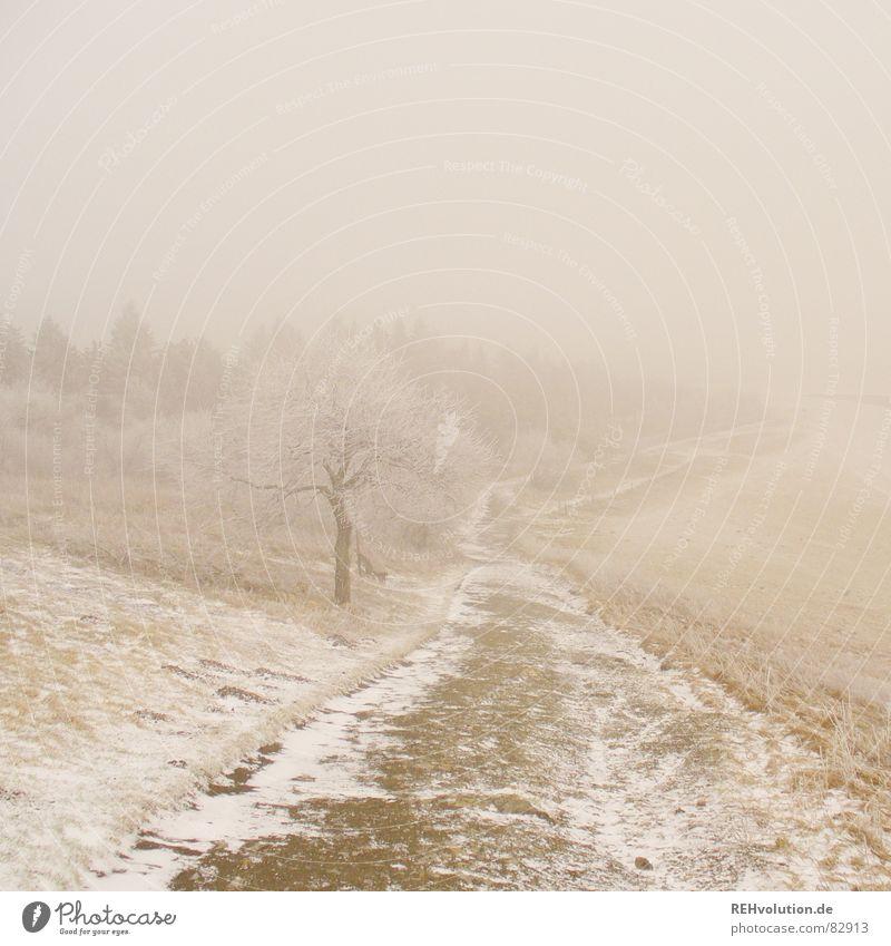 Weg ins ungewisse Natur Himmel Baum Winter Wolken Ferne Wald Leben kalt Schnee Wiese Gras Berge u. Gebirge Wege & Pfade Landschaft