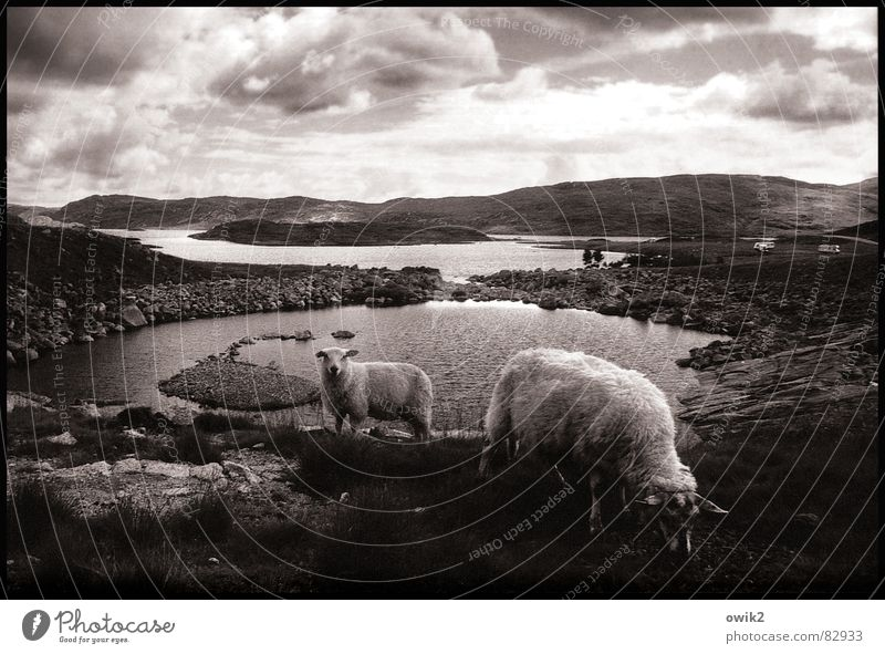 Dicke Kumpels Himmel Natur Wasser Pflanze Wolken Ferne Tier Ernährung Freiheit Berge u. Gebirge Umwelt Landschaft Erde Wind Horizont Ausflug