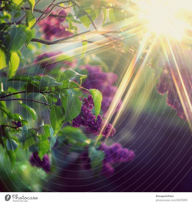 ::14-23:: Umwelt Natur Landschaft Pflanze Tier Klima Klimawandel Wetter Schönes Wetter Blume Sträucher Blatt Blüte Grünpflanze Garten Park Wald Mauer Wand
