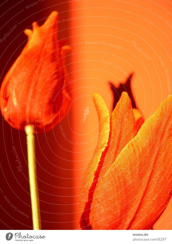 rote Tulpen auf orange Stoff Makroaufnahme Nahaufnahme Schatten