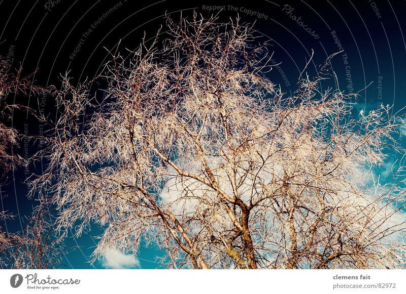 Baum Natur Himmel Baum ruhig kalt Sicherheit mehrere Schutz Ast viele Geborgenheit Zweig Eyecatcher Beweis