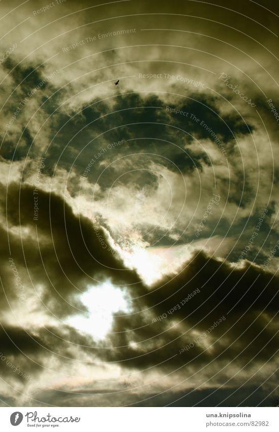 vogelfrei Sonne Lampe Himmel Wolken Horizont schlechtes Wetter Wind Vogel glänzend hell Lichteinfall Windböe blitzen trüb Schutzdach Luv Windseite verdunkeln