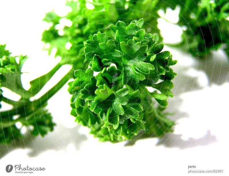 Petersilie II Kräuter & Gewürze Dekoration & Verzierung Küche Kräutergarten grün Gastronomie Gemüse Vegetarische Ernährung genießen jarts Menschenleer