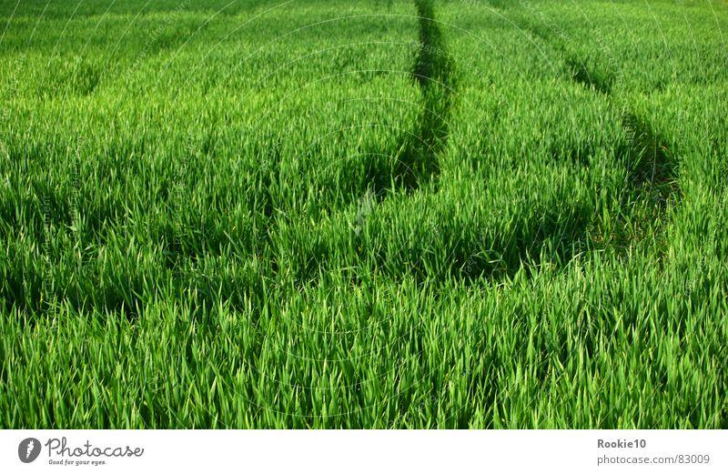Keine Spuren hinterlassen:-) grün Feld Sommer Unendlichkeit Natur Beweis destruction Freiheit trace traces