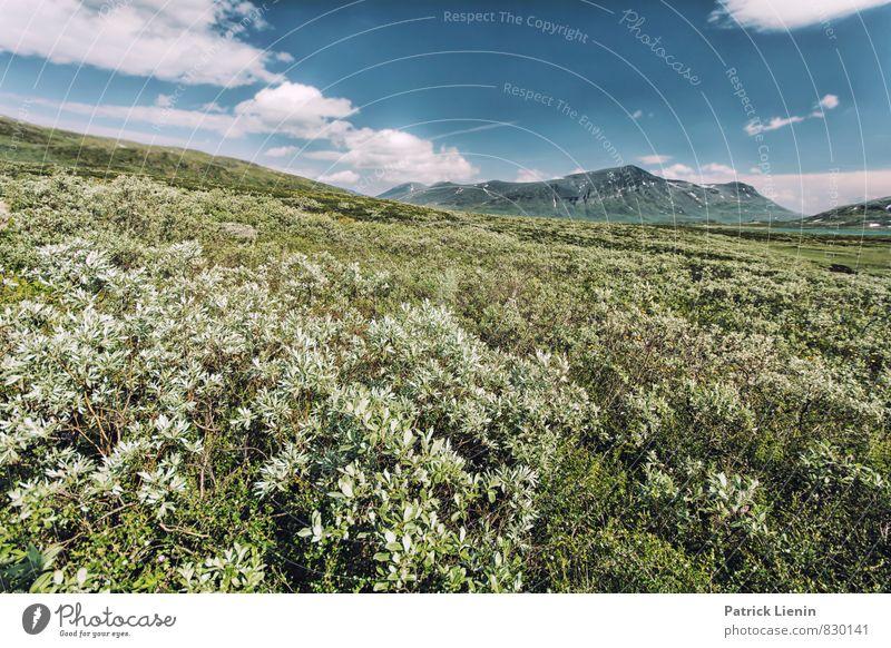 Weit weg in Lappland Himmel Natur Ferien & Urlaub & Reisen Pflanze Sommer Landschaft Wolken Ferne Berge u. Gebirge Umwelt Freiheit Stimmung Wetter Tourismus