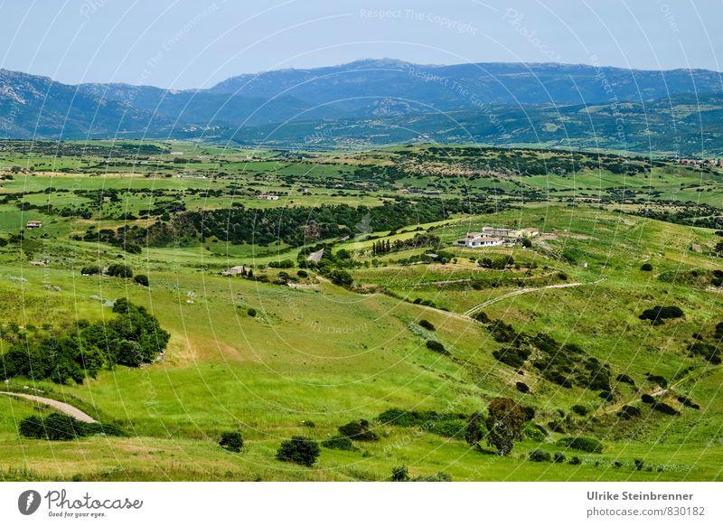 Paesaggio sardo Natur Ferien & Urlaub & Reisen Pflanze grün Baum Erholung Einsamkeit Landschaft ruhig Ferne Wald Umwelt Berge u. Gebirge Gras natürlich Frühling
