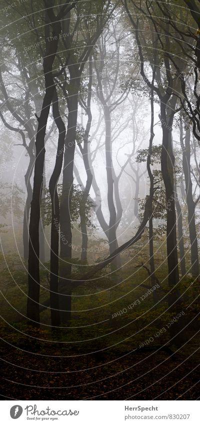 (n)ur wald Umwelt Natur Landschaft Pflanze Herbst Nebel Baum Wald Wien Österreich Stadtrand Sehenswürdigkeit ästhetisch groß gruselig natürlich schön braun grau