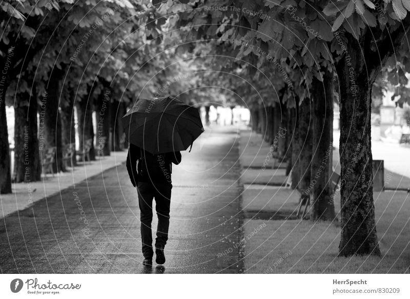 Sommerregen maskulin Mann Erwachsene 1 Mensch 30-45 Jahre schlechtes Wetter Regen Baum Luzern gehen kalt Allee Regenschirm Spaziergang Wege & Pfade