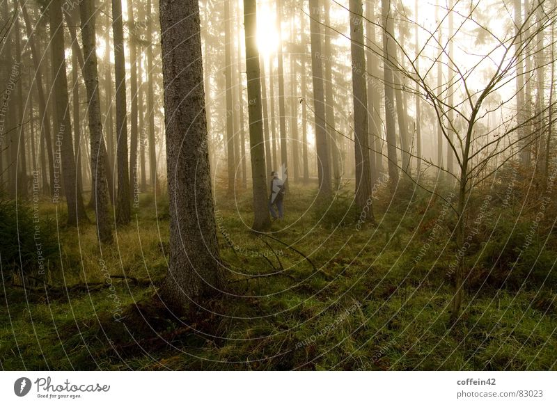 Ein Männlein steht im Walde Baum Sonne Winter ruhig Blatt Wald dunkel Herbst Traurigkeit Wärme Stimmung Nebel Frieden Bart Mütze Baumstamm