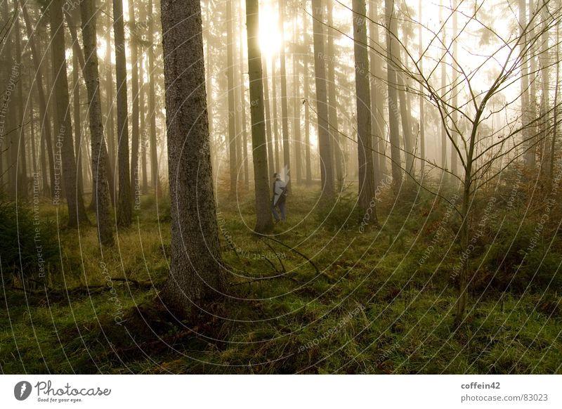 Ein Männlein steht im Walde dunkel Jäger Bart Stimmung Waldlichtung Baum Nebel Herbst Baumstamm Blatt Außenaufnahme Morgen Sonnenuntergang Herbstbeginn ruhig