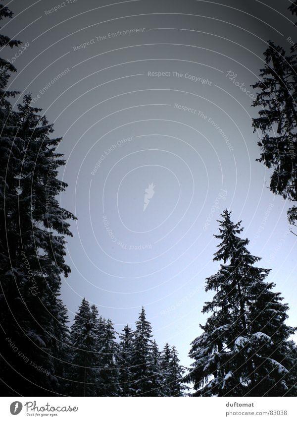 dämmerts...? Himmel blau Baum Winter kalt Schnee grau Eis frisch Spaziergang Tanne Abenddämmerung hart Paradies kühlen Nadelbaum