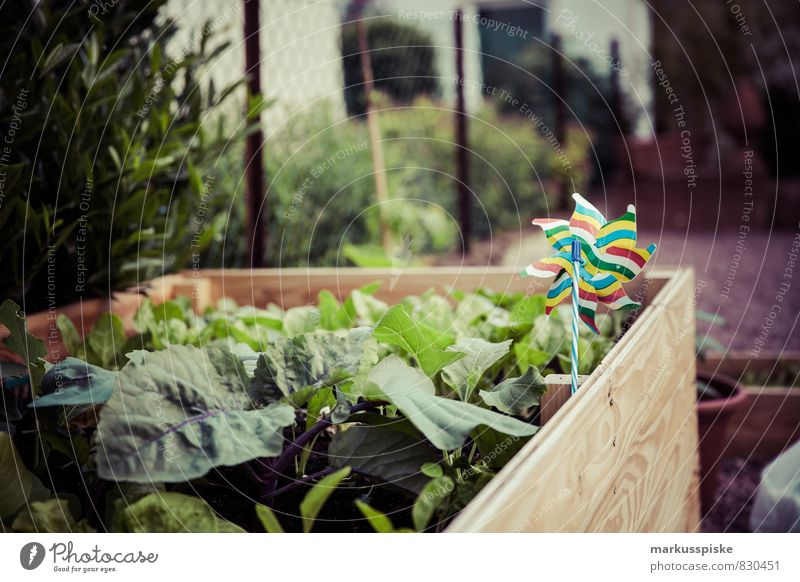 hochbeet- urban gardening Pflanze Freude Gesunde Ernährung Leben Glück Essen Garten Lebensmittel Lifestyle Frucht Blühend Kräuter & Gewürze Gemüse Ernte