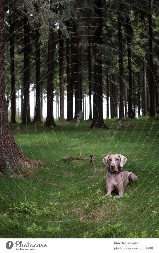 Geduld | Warten Hund Natur Sommer Baum Erholung Landschaft ruhig Tier Wald Leben Wiese Gesundheit warten frisch beobachten Freundlichkeit