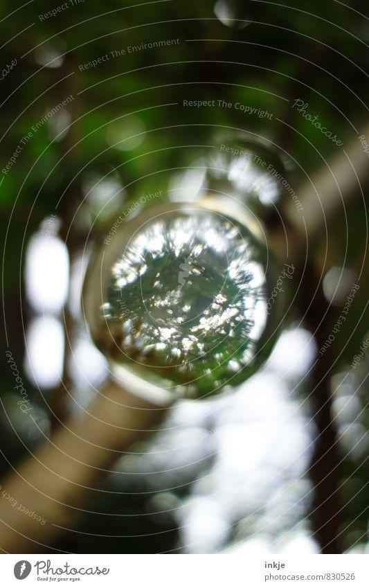 Zaubertrank Natur Pflanze grün Baum dunkel Umwelt außergewöhnlich oben träumen Glas Zukunft rund Neugier geheimnisvoll Flüssigkeit Kugel
