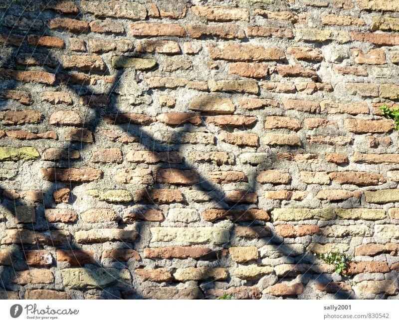 hinter römischen Gittern Altstadt Bauwerk Mauer Wand Stein alt dunkel eckig historisch Platzangst Gewalt Zaun Sicherheit Backsteinwand Backsteinfassade Ruine
