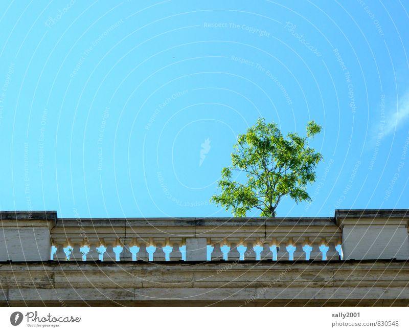Balkonbegrünung alt Stadt Sommer Baum Erholung Einsamkeit Architektur Gebäude natürlich Stein Wachstum Häusliches Leben Zufriedenheit stehen Perspektive