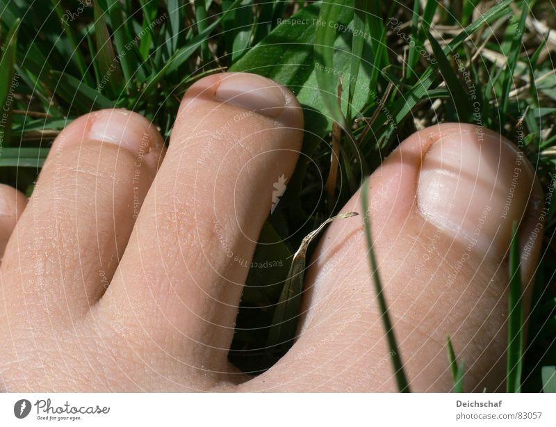 Sommergefühl Mensch Frau grün Freude Gras Fuß gehen Haut Bodenbelag Rasen genießen Lebensfreude Barfuß Zehen