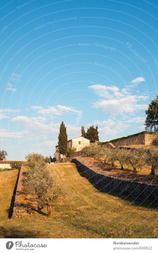 Toskana Ferien & Urlaub & Reisen Tourismus Sommer Natur Landschaft Himmel Wolken Klima Schönes Wetter Baum Garten Dorf Kleinstadt Stadtrand Haus Einfamilienhaus
