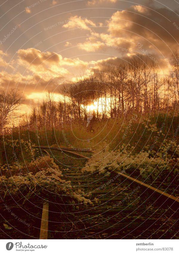 Gleisdreieck Duschgel Sonnenuntergang Wald Heide Wolken Gleise Romantik Urwald Märchen Nadelwald Sträucher Tagtraum Scharfschütze Dämmerung Wachtraum Wäldchen