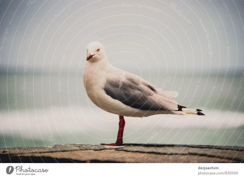 Verlockung/ Movie Star schön weiß Sommer Meer ruhig Freude Tier Umwelt grau außergewöhnlich Vogel authentisch ästhetisch genießen Schönes Wetter beobachten