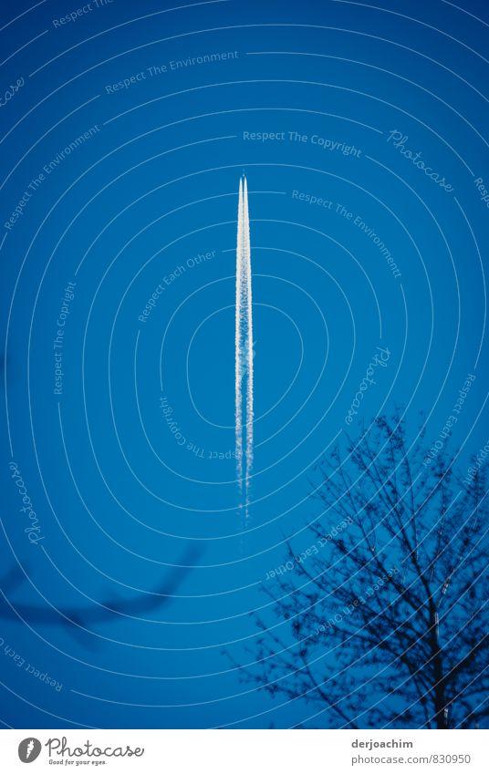 Himmelsschiene blau schön weiß Sommer Umwelt Bewegung außergewöhnlich hell fliegen glänzend authentisch ästhetisch Schönes Wetter beobachten Flugzeug
