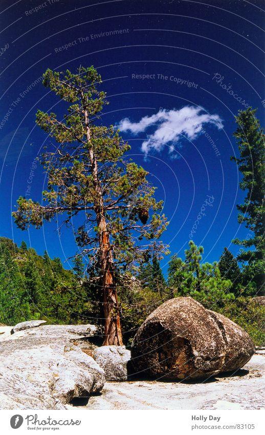 Baum, Stein, Wolke Wolken Watte grün blau Wald Baumstamm Pause Yosemite NP Nationalpark Kalifornien Erholung USA Sommer Felsen Bruchstück Kitsch Himmel Natur