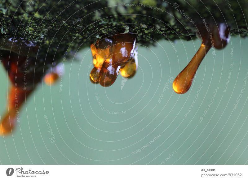 Harztropfen Wellness Förster Umwelt Natur Pflanze Baum Garten Park Holz hängen weinen ästhetisch Flüssigkeit glänzend natürlich braun gelb türkis achtsam ruhig
