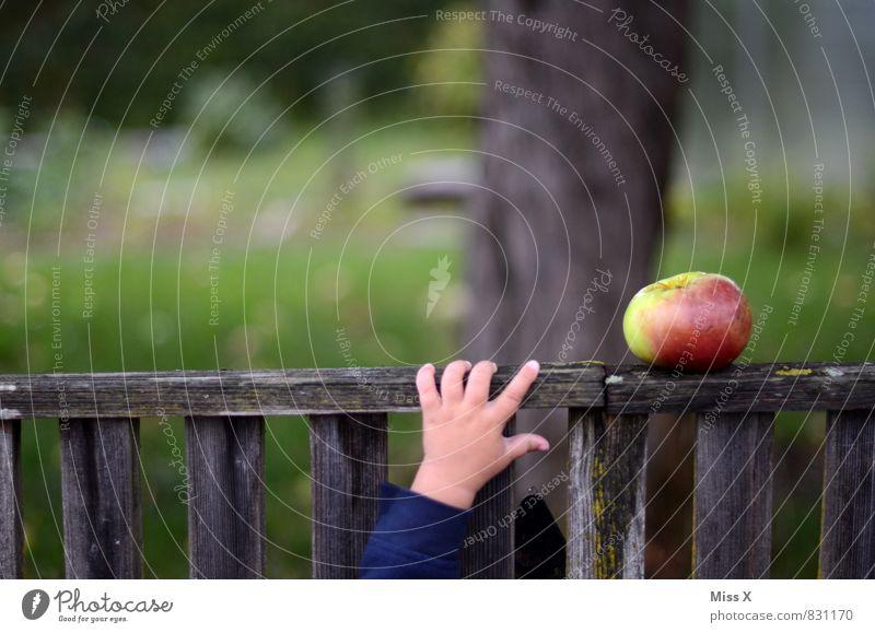 Apfeldieb Mensch Sommer Hand Gesunde Ernährung Gefühle Herbst Gesundheit Garten Stimmung Lebensmittel frisch Baby Finger süß lecker