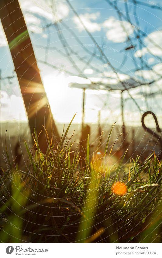 Look to the Sun Natur Landschaft Erde Sonne Sonnenaufgang Sonnenuntergang Sonnenlicht Frühling Schönes Wetter Pflanze Gras liegen Blick blau gelb grün