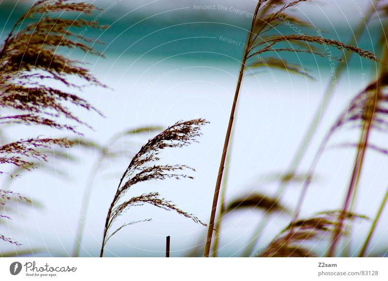 reed Natur Wasser blau Pflanze Winter kalt See Landschaft Eis braun Wind Wachstum mehrere gefroren Bayern wehen