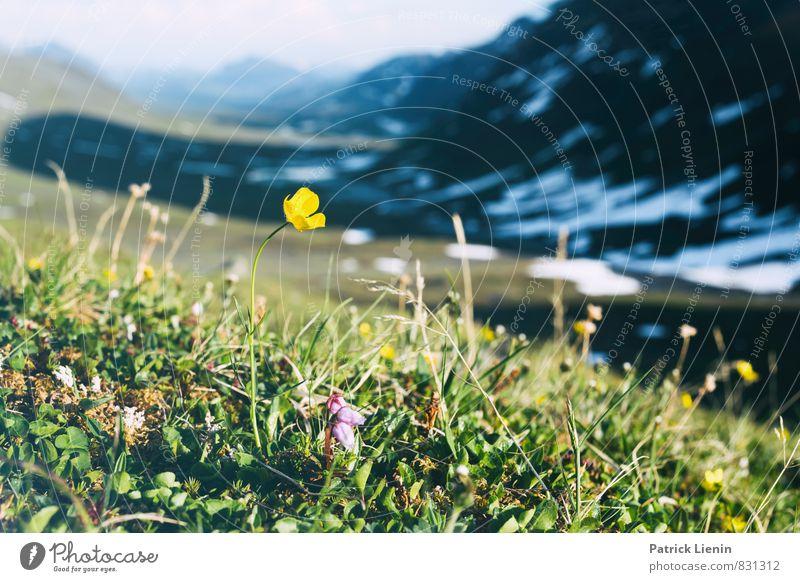 Midnight Sun VII Himmel Natur Ferien & Urlaub & Reisen Pflanze Sommer Blume Landschaft Ferne Umwelt Berge u. Gebirge Wiese Freiheit Felsen Wetter Sträucher