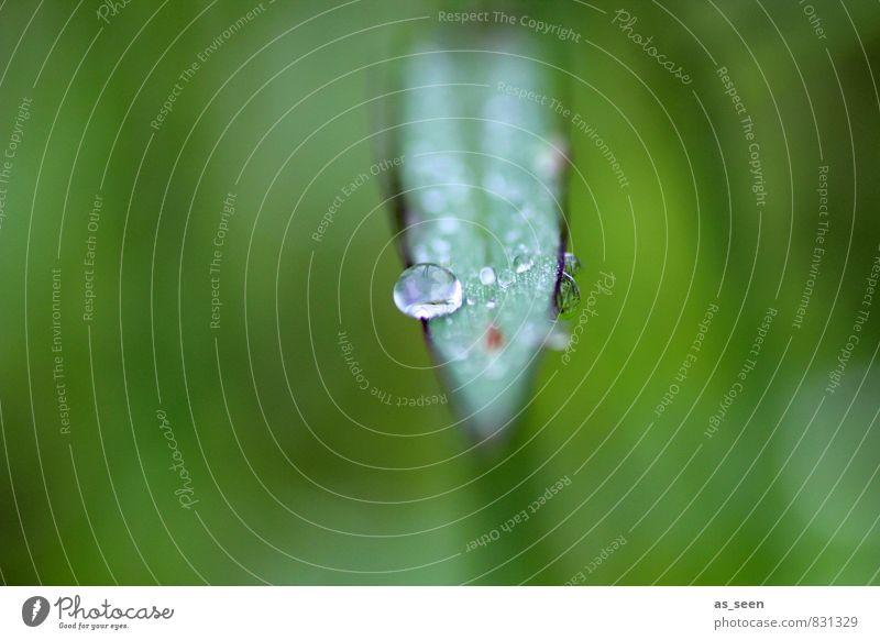 Tautropfen Natur schön grün Wasser Sommer Erholung ruhig Umwelt Leben Wiese Gras Gesundheit Garten glänzend Regen Design