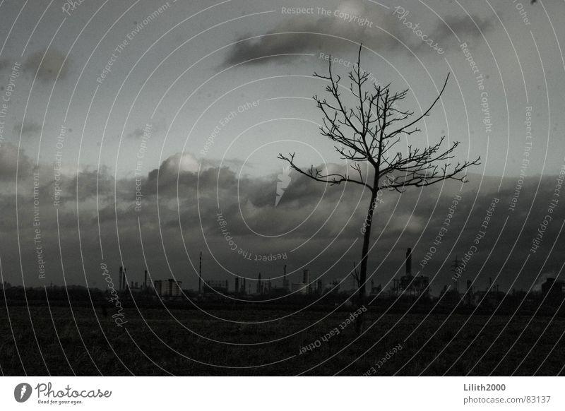 Der Einsame Himmel Baum Winter Wolken kalt grau Feld Zweig