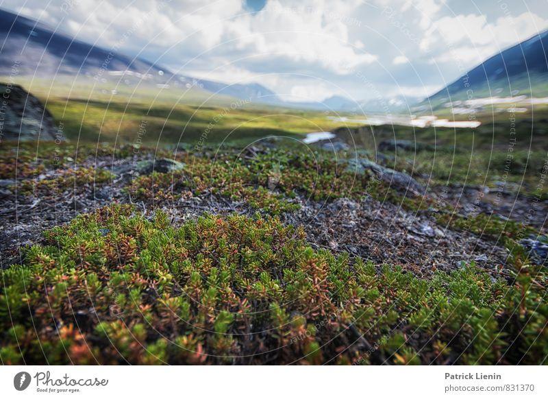 Midnight Sun VI Himmel Natur Ferien & Urlaub & Reisen Pflanze Sommer Erholung Einsamkeit Landschaft ruhig Ferne Umwelt Gras Freiheit Wetter Zufriedenheit