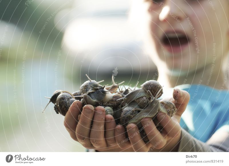 Fette Beute! Mensch Kind Natur Hand Freude Junge Spielen Freiheit Garten Häusliches Leben Wildtier Kindheit Fröhlichkeit Tiergruppe Abenteuer Neugier