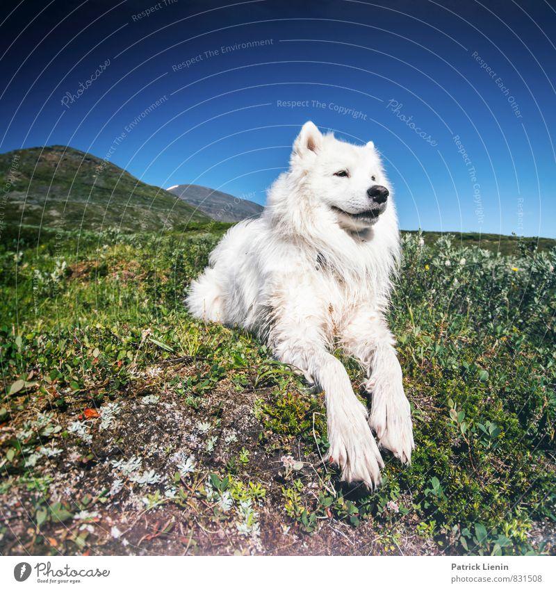Having a break Hund Himmel Natur Pflanze Sommer Sonne Erholung Landschaft Tier Ferne Umwelt Berge u. Gebirge Wiese Freiheit Luft Wetter