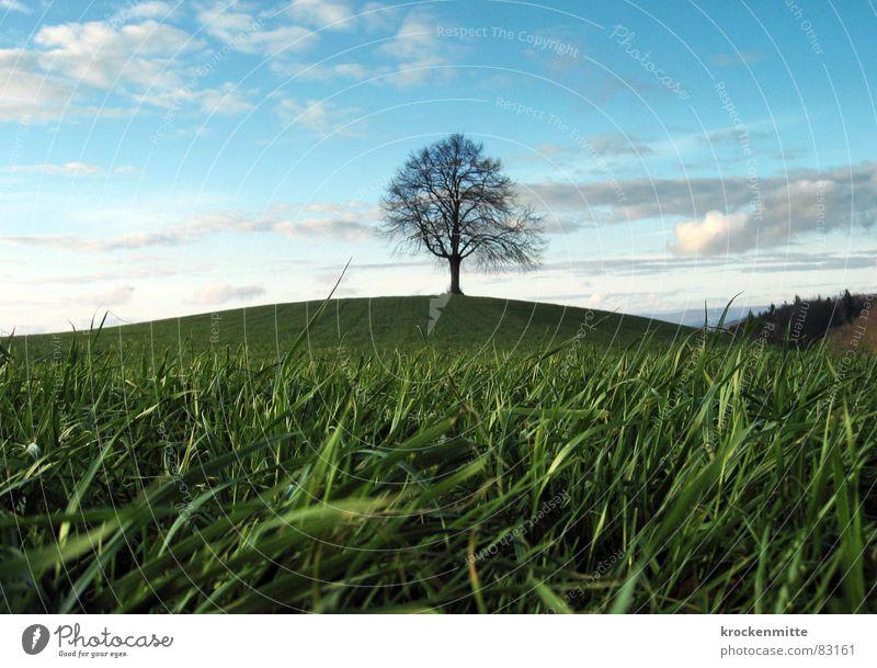 Traumbaum Baum Wolken Hügel Wiese Gras Schweiz Jahreszeiten Ferne Laubbaum Baumstamm Umwelt grün Mitte Grünfläche Winter milder winter Wind Natur Spaziergang
