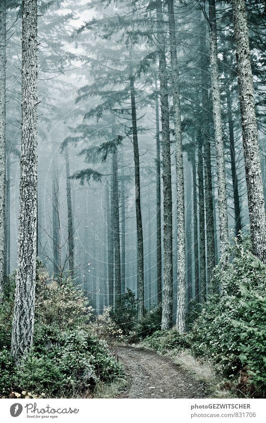 Waldweg Natur Landschaft Herbst Baum Sträucher Moos alt bedrohlich gruselig kalt natürlich blau grau grün silber türkis weiß Stimmung träumen Umwelt Fußweg