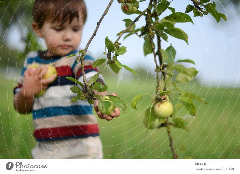 Apfelfips Mensch Kind Sommer Baum Gesunde Ernährung Herbst Essen Gesundheit Garten Lebensmittel Freizeit & Hobby Frucht Kindheit frisch niedlich