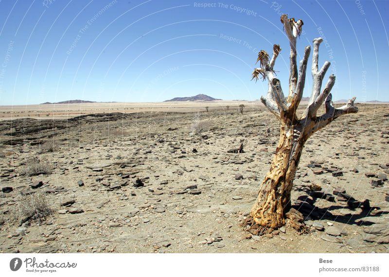 Öde alt Baum Einsamkeit Stein trist Afrika Wüste dünn trocken Namibia