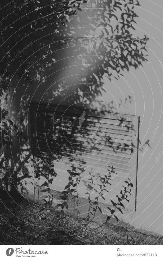gestrypp Pflanze Sträucher Mauer Wand trist grau Alltagsfotografie Schatten Lüftung Lüftungsschlitz Schwarzweißfoto Außenaufnahme Menschenleer Tag Licht