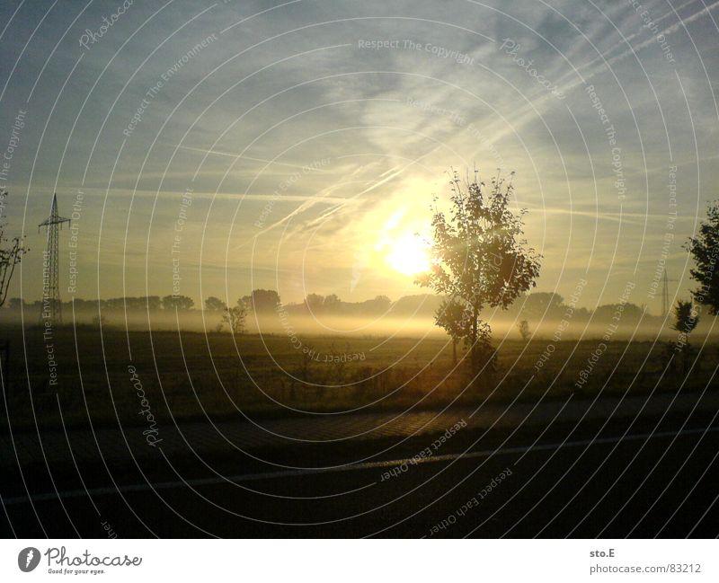 # 1 Höhepunkt Sonnenuntergang Horizont Baum schlechtes Wetter Stillleben Nebel Fahrbahnmarkierung Straßenrand Sträucher blenden Streifen Reflexion & Spiegelung