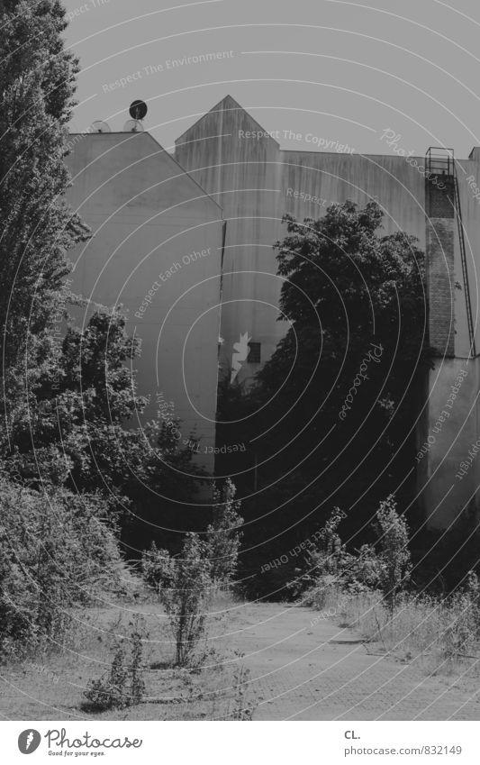 C/L in B w/J+S Umwelt Natur Himmel Baum Sträucher Stadt Haus Gebäude Architektur Mauer Wand trist Häusliches Leben Hinterhof Schwarzweißfoto Außenaufnahme