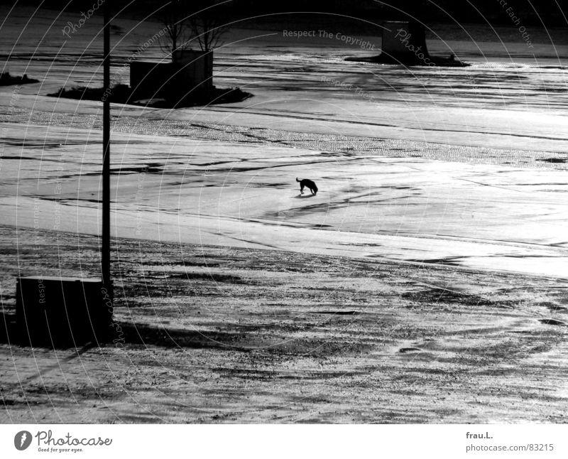 Hund im Regen Verteiler Platz Einsamkeit Sonnenlicht Stadt klein Miniatur winzig Säugetier Verkehrswege Freizeit & Hobby Heiligengeistfeld Straße Schönes Wetter
