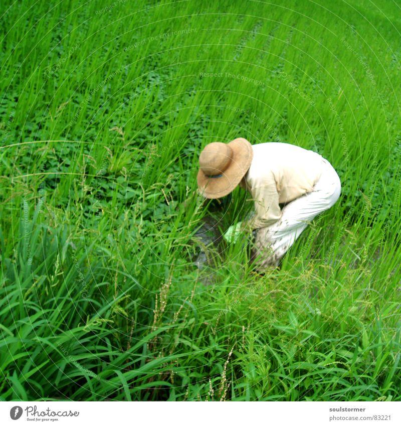 Give me Rice Reisfeld Pflanzer Gras grün Japan Asien Außenaufnahme Ferien & Urlaub & Reisen Wiese Ernährung Grünfläche anstrengen Landwirt Überarbeitung
