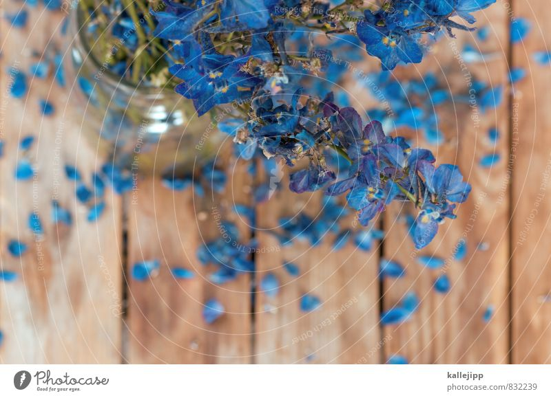 #0b7eb3 Umwelt Natur Pflanze Blume Wildpflanze Blühend Vergißmeinnicht blau Tisch Holz Unschärfe Glas Vase verblüht Blüte Blumenstrauß geburtstagsgruss
