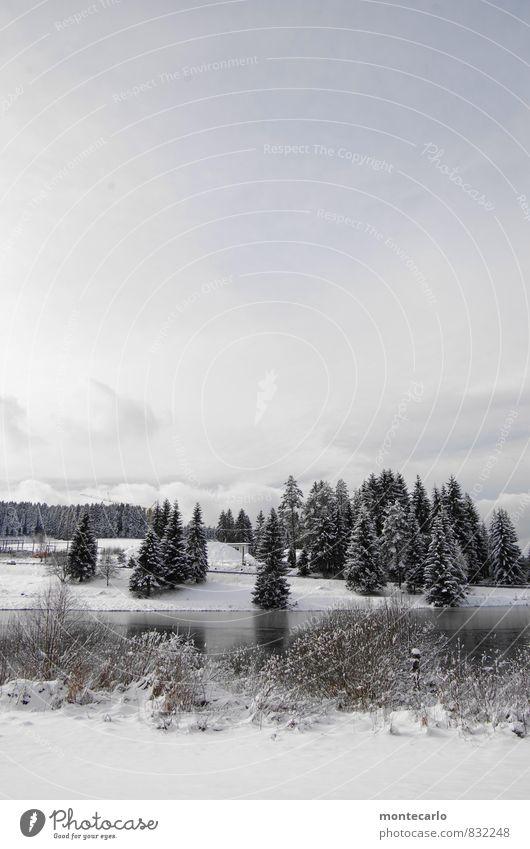 bizarr | august 2099 Umwelt Natur Landschaft Pflanze Erde Wasser Himmel Wolken Horizont Winter Klimawandel Wetter Eis Frost Schnee Baum Gras Sträucher