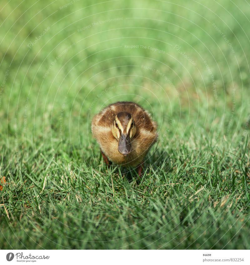 Na warte, Freundchen! Natur grün Sommer Tier gelb Tierjunges Gefühle Wiese Gras Frühling klein Wildtier Lebensfreude niedlich Neugier tierisch