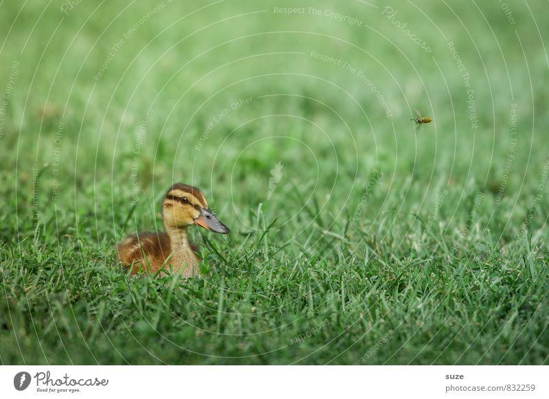 Sie hat's kommen sehen ... Natur grün Sommer Tier Umwelt Tierjunges Wiese Gras Frühling natürlich klein Vogel liegen Wetter Wildtier authentisch